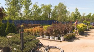Get Gardening with Global News Morning – Trees and Shrubs